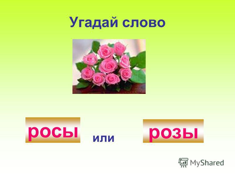 Угадай слово роси или розы