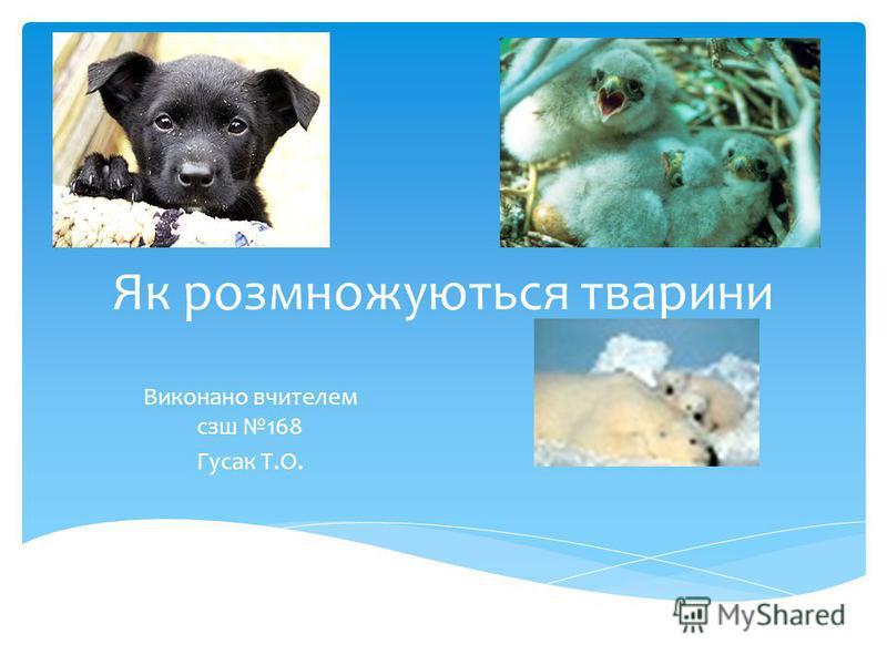 Як розмножуються тварини Виконано вчителем сзш 168 Гусак Т.О.