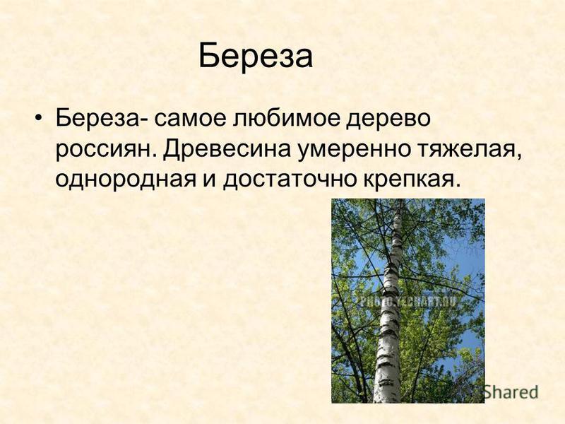 Береза Береза- самое любимое дерево россиян. Древесина умеренно тяжелая, однородная и достаточно крепкая.