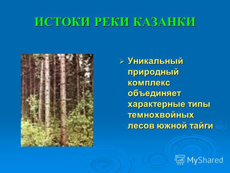 ИСТОКИ РЕКИ КАЗАНКИ Уникальный природный комплекс объединяет характерные типы темнохвойных лесов южной тайги Уникальный природный комплекс объединяет характерные типы темнохвойных лесов южной тайги