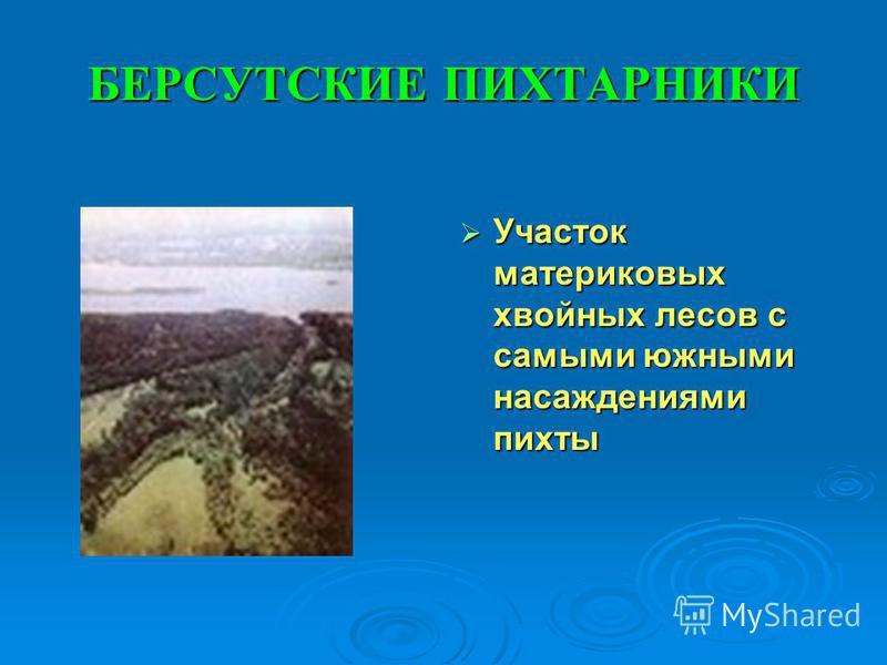 БЕРСУТСКИЕ ПИХТАРНИКИ Участок материковых хвойных лесов с самыми южными насаждениями пихты Участок материковых хвойных лесов с самыми южными насаждениями пихты