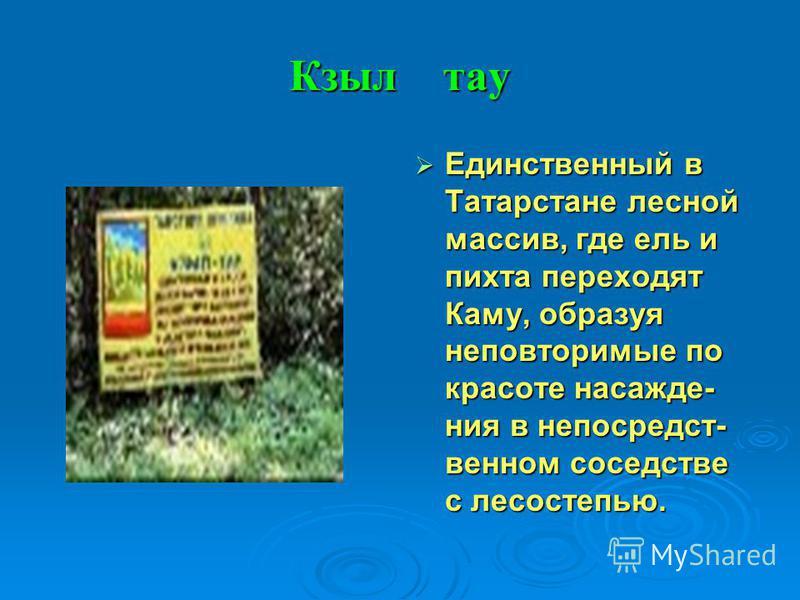 Кзыл тау Единственный в Татарстане лесной массив, где ель и пихта переходят Каму, образуя неповторимые по красоте насаждения в непосредственном соседстве с лесостепью. Единственный в Татарстане лесной массив, где ель и пихта переходят Каму, образуя н