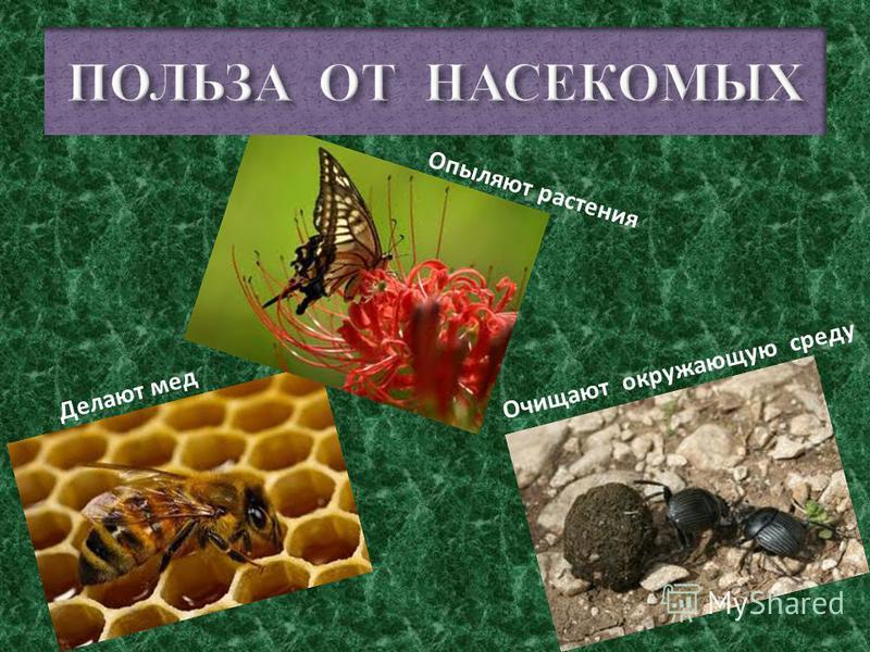 Вша Гнида Слепень Клещ Клоп Блоха Малярийный комар Это – насекомые -паразиты - вредные для человека. - сосут кровь; - питаются остатками пищи; - разносят заразу.