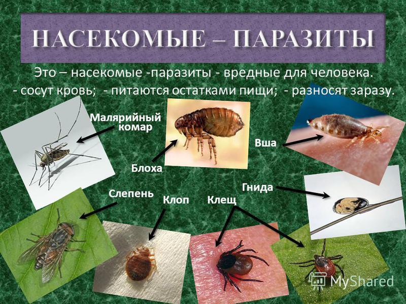 Некоторые плотоядные насекомые с удовольствием питаются мясом мертвых животных. Таких насекомых называют - падальщиками. Улитка Жук-могильщик Жук-навозник Муха
