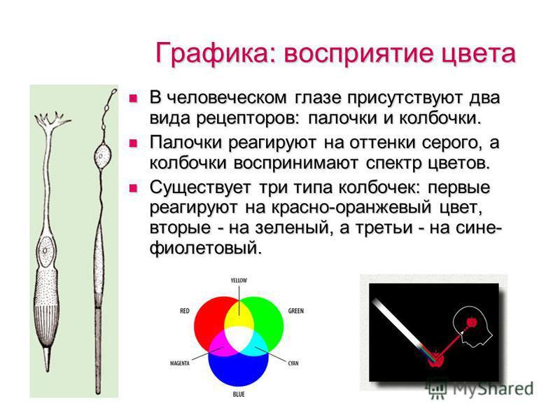 Графика: восприятие цвета Лягушка видит только движущиеся предметы. Чтобы увидеть все остальное, она должна сама начать двигаться. Лягушка видит только движущиеся предметы. Чтобы увидеть все остальное, она должна сама начать двигаться. Сумеречные и н