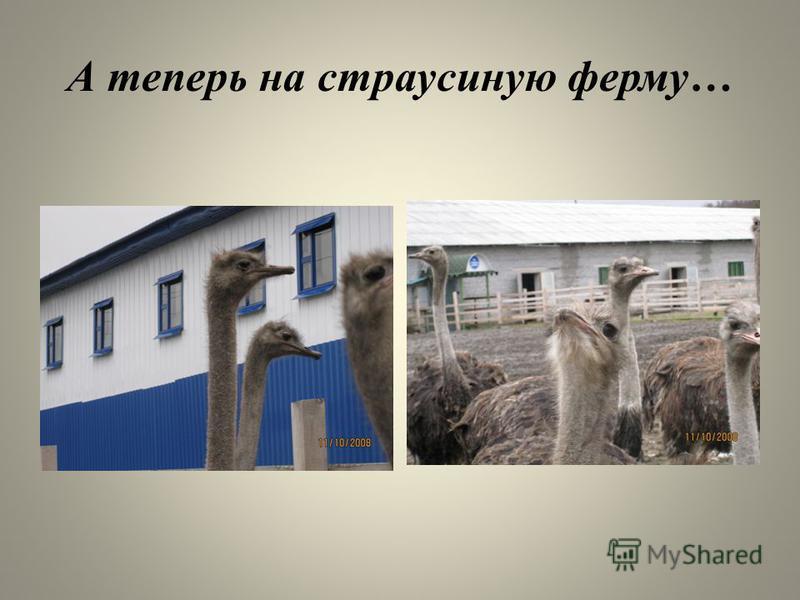 А теперь на страусиную ферму…