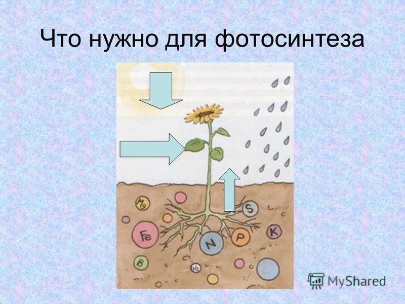 Что нужно для фотосинтеза