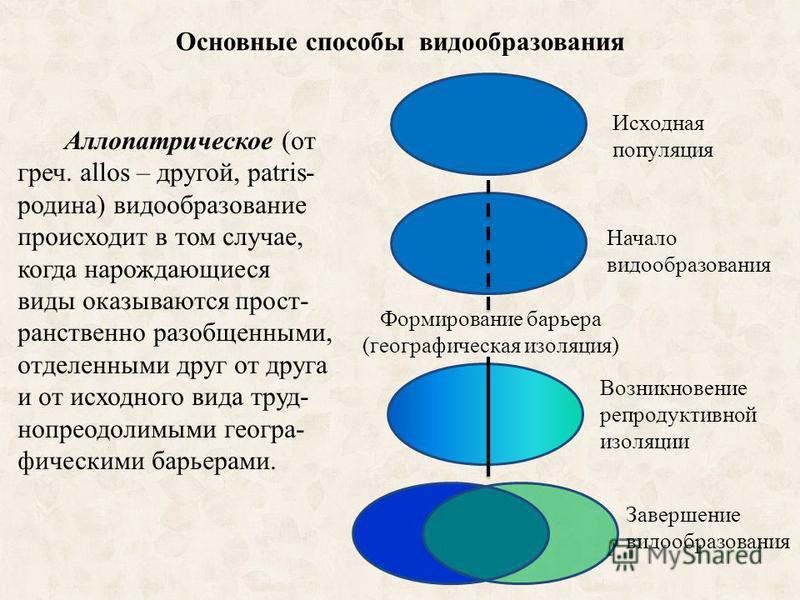 Основные способы видообразования Аллопатрическое (от греч. allos – другой, patris- родина) видообразование происходит в том случае, когда нарождающиеся виды оказываются пространственно разобщенными, отделенными друг от друга и от исходного вида труд-