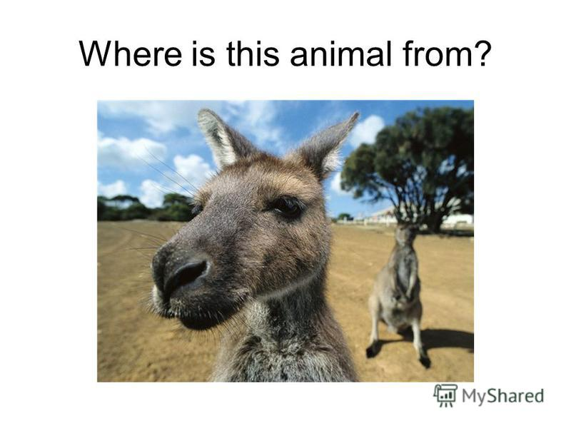 Where is this animal from?