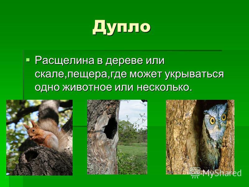 Дупло Дупло Расщелина в дереве или скале,пещера,где может укрываться одно животное или несколько.