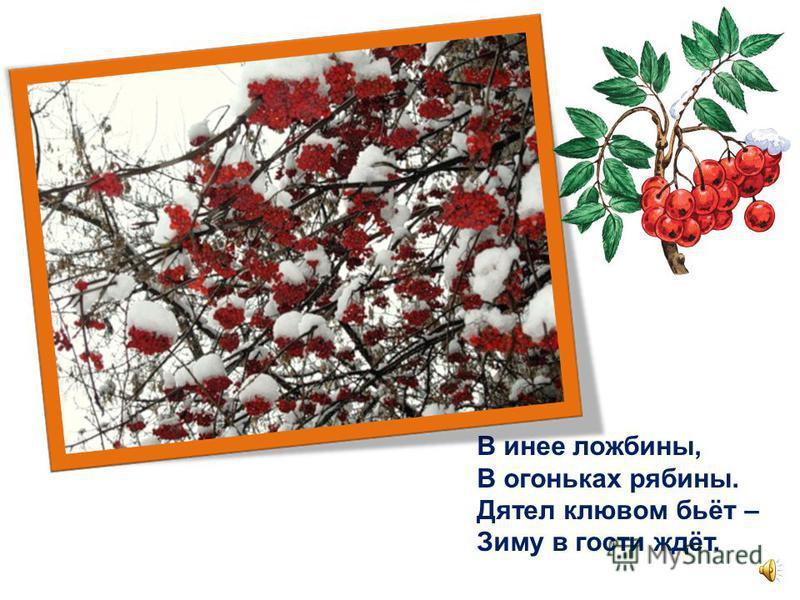 Сорвал листву с ветвей октябрь, Укрыл листву снежком … ноябрь