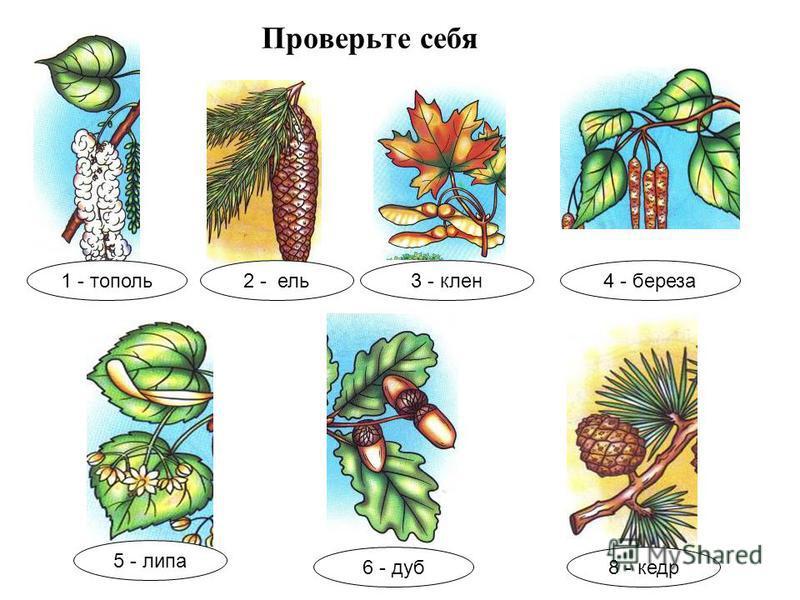 Подпишите названия растений 1423 865