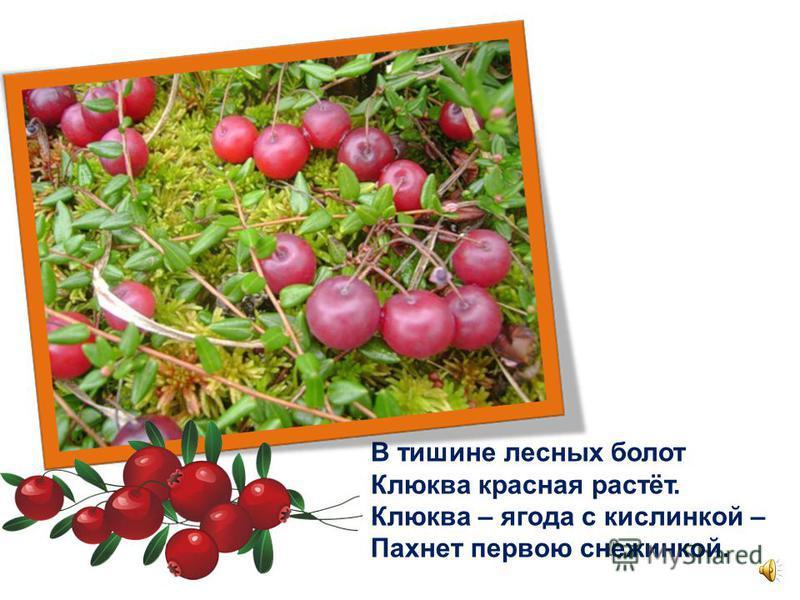 Журавлей не слышны крики – Улетели в тёплый край… Зреют ягоды брусники – Сколько хочешь, собирай!