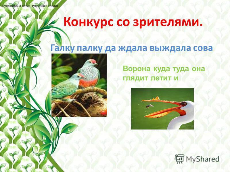 9 КОНКУРС. Птичьи премудрости