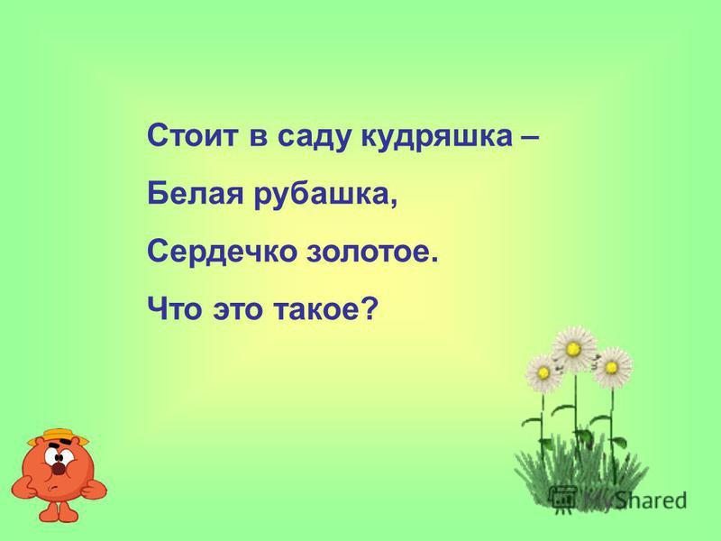 Стоит в саду кудряшка – Белая рубашка, Сердечко золотое. Что это такое?
