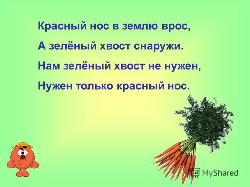 Красный нос в землю врос, А зелёный хвост снаружи. Нам зелёный хвост не нужен, Нужен только красный нос.