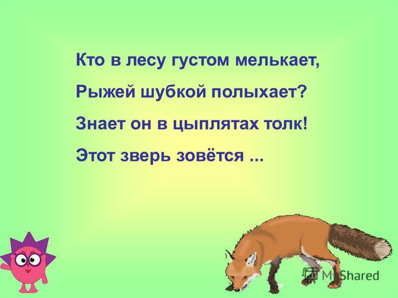 Кто в лесу густом мелькает, Рыжей шубкой полыхает? Знает он в цыплятах толк! Этот зверь зовётся...