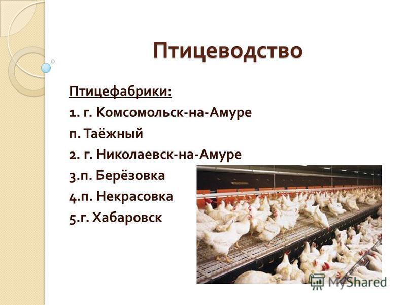 Птицеводство Птицефабрики : 1. г. Комсомольск - на - Амуре п. Таёжный 2. г. Николаевск - на - Амуре 3. п. Берёзовка 4. п. Некрасовка 5. г. Хабаровск