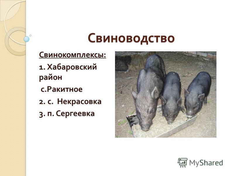 Свиноводство Свинокомплексы : 1. Хабаровский район с. Ракитное 2. с. Некрасовка 3. п. Сергеевка