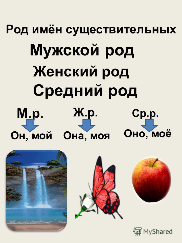 Род имён существительных Мужской род Женский род Средний род М.р. Ж.р. Ср.р. Он, мой Она, моя Оно, моё