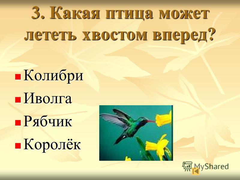 3. Какая птица может лететь хвостом вперед? Колибри Колибри Иволга Иволга Рябчик Рябчик Королёк Королёк