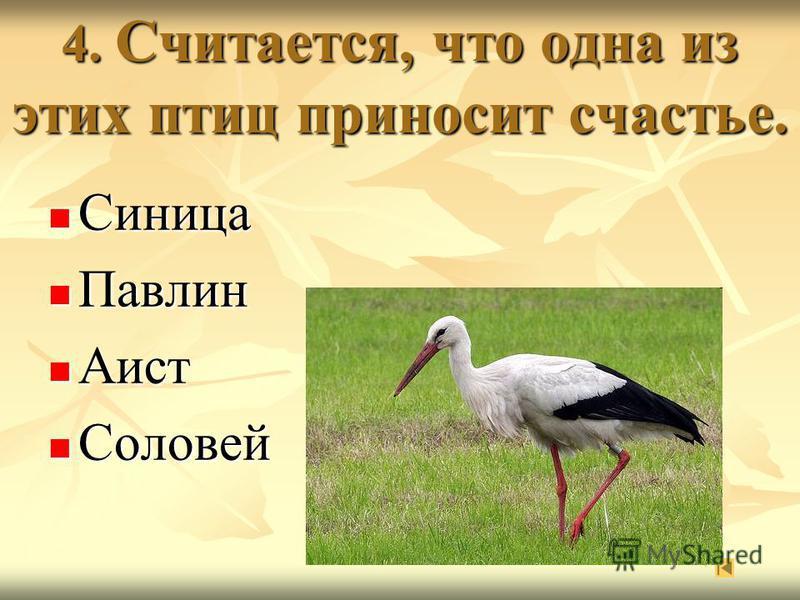 4. Считается, что одна из этих птиц приносит счастье. Синица Павлин Аист Соловей