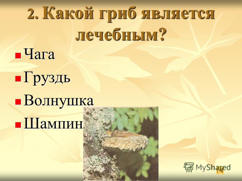 2. Какой гриб является лечебным? Чага Чага Груздь Груздь Волнушка Волнушка Шампиньон Шампиньон