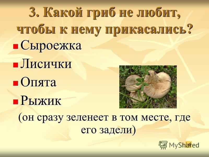 3. Какой гриб не любит, чтобы к нему прикасались? Сыроежка Сыроежка Лисички Лисички Опята Опята Рыжик Рыжик (он сразу зеленеет в том месте, где его задели)