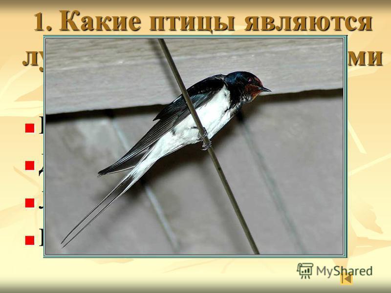 1. Какие птицы являются лучшими предсказателями погоды? Воробьи Воробьи Дятлы Дятлы Ласточки Ласточки Кукушки Кукушки