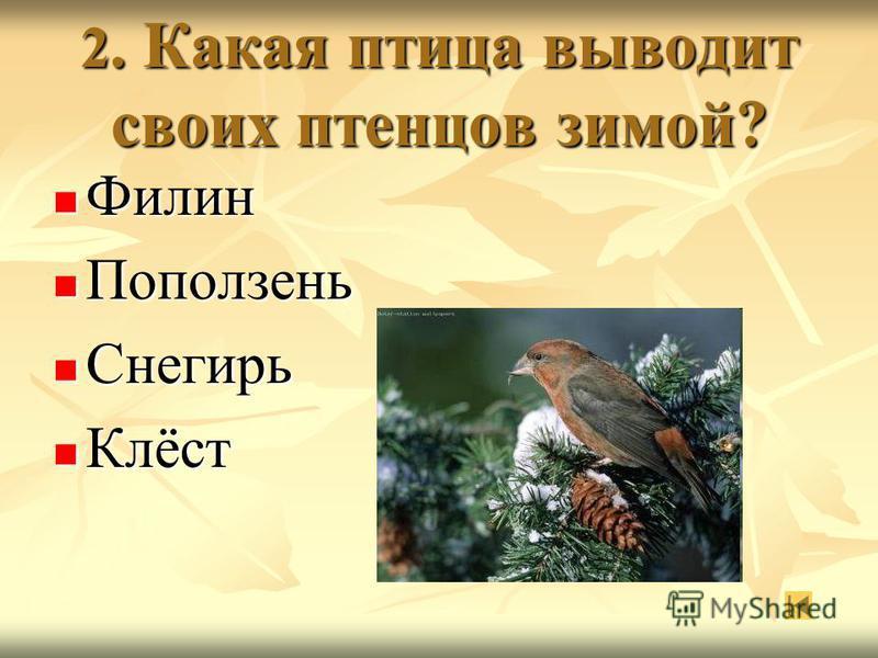 2. Какая птица выводит своих птенцов зимой? Филин Поползень Снегирь Клёст