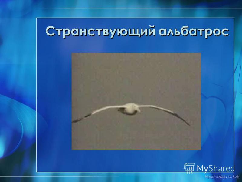 Странствующий альбатрос Николаева С.Б. ®