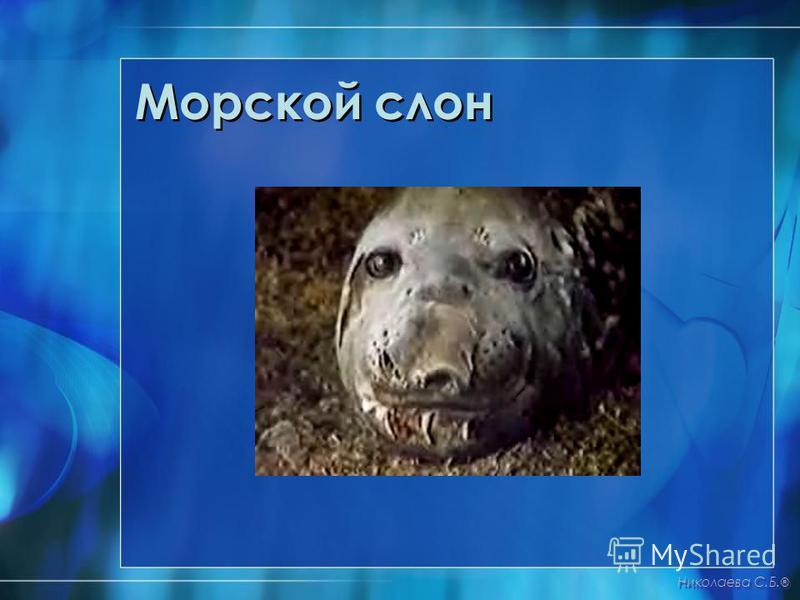 Морской слон Николаева С.Б. ®