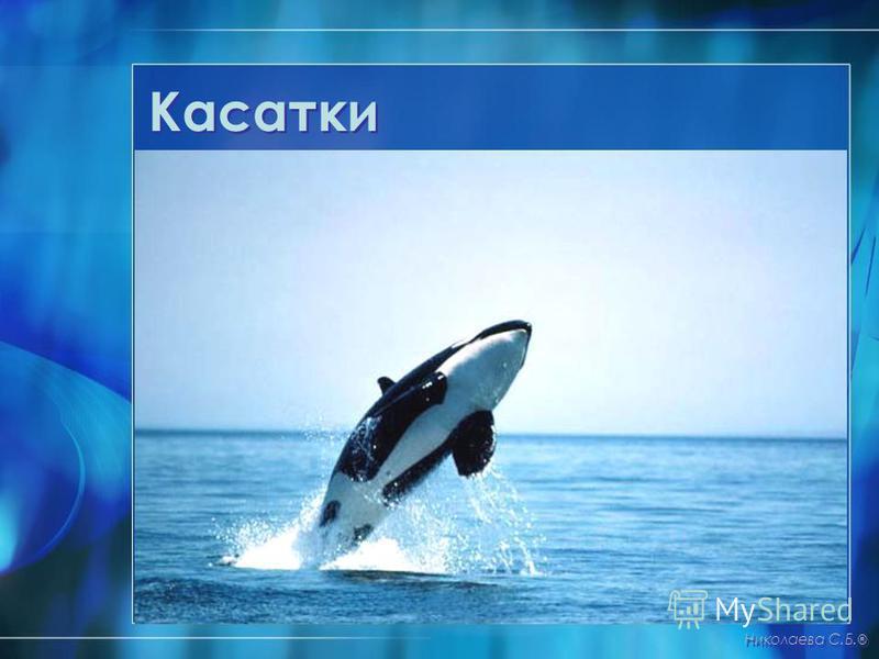 Касатки Николаева С.Б. ®