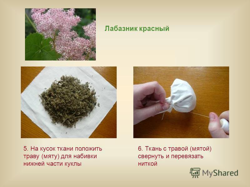 Лабазник красный 5. На кусок ткани положить траву (мяту) для набивки нижней части куклы 6. Ткань с травой (мятой) свернуть и перевязать ниткой