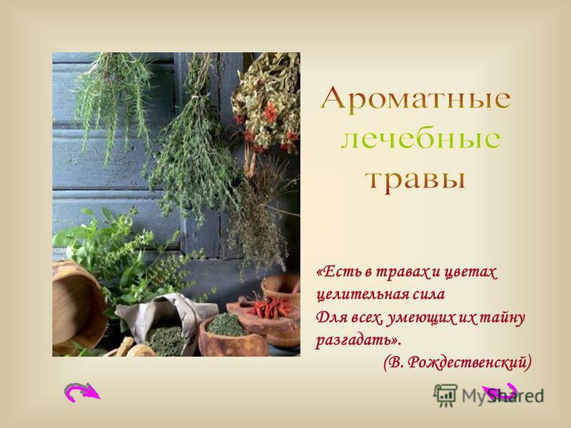 «Есть в травах и цветах целительная сила Для всех, умеющих их тайну разгадать». (В. Рождественский)