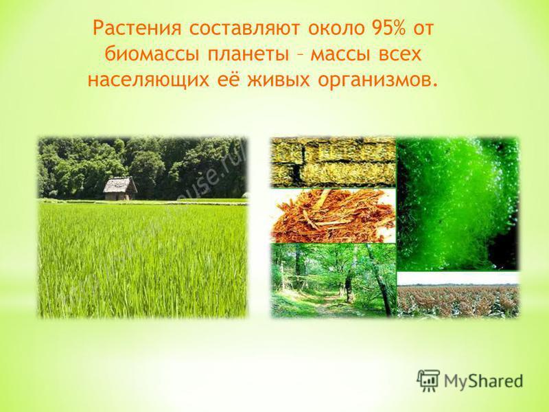Растения составляют около 95% от биомассы планеты – массы всех населяющих её живых организмов.