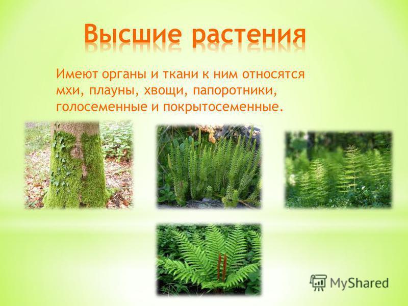 Имеют органы и ткани к ним относятся мхи, плауны, хвощи, папоротники, голосеменные и покрытосеменные.