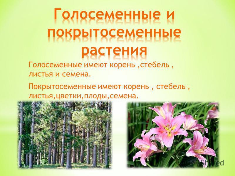 Голосеменные имеют корень,стебель, листья и семена. Покрытосеменные имеют корень, стебель, листья,цветки,плоды,семена.