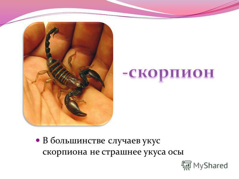 В большинстве случаев укус скорпиона не страшнее укуса осы