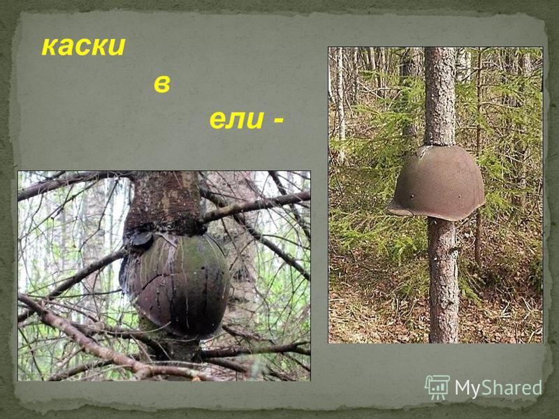 каски в ели -