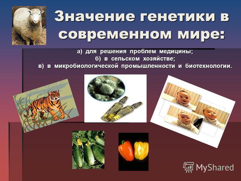 Значение генетики в современном мире: а) для решения проблем медицины; б) в сельском хозяйстве; б) в сельском хозяйстве; в) в микробиологической промышленности и биотехнологии. в) в микробиологической промышленности и биотехнологии.