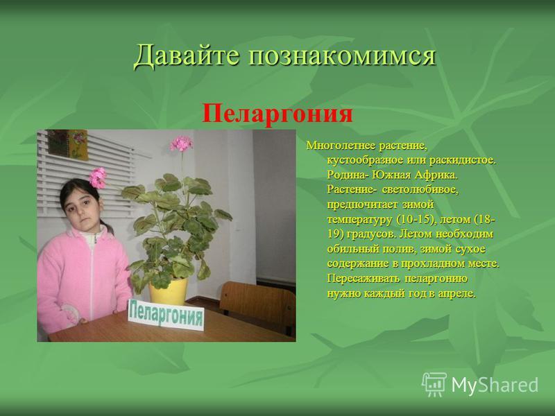 Давайте познакомимся Многолетнее растение, кустообразное или раскидистое. Родина- Южная Африка. Растение- светолюбивое, предпочитает зимой температуру (10-15), летом (18- 19) градусов. Летом необходим обильный полив, зимой сухое содержание в прохладн