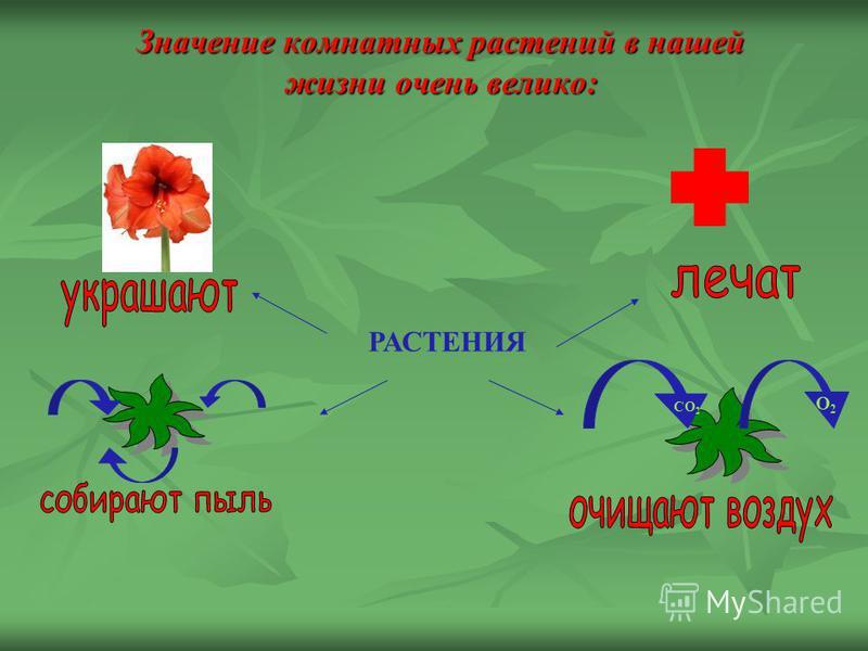 Значение комнатных растений в нашей жизни очень велико: РАСТЕНИЯ СО 2 О2О2
