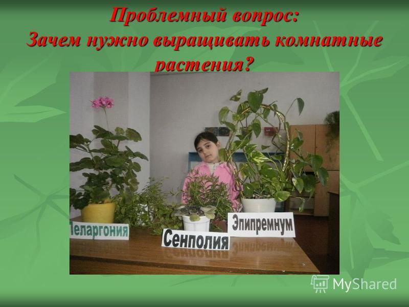 Проблемный вопрос: Зачем нужно выращивать комнатные растения?