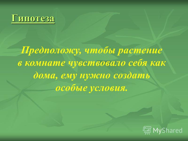 Гипотеза Предположу, чтобы растение в комнате чувствовало себя как дома, ему нужно создать особые условия.