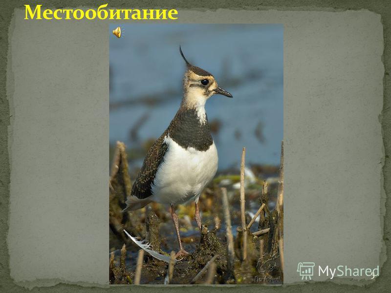 с. Богородское 5