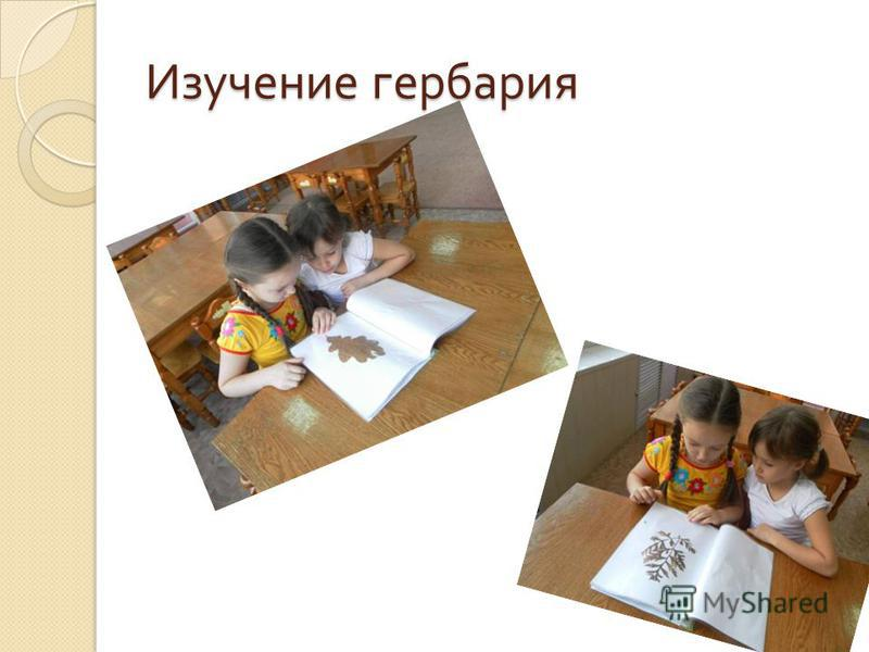 Изучение гербария