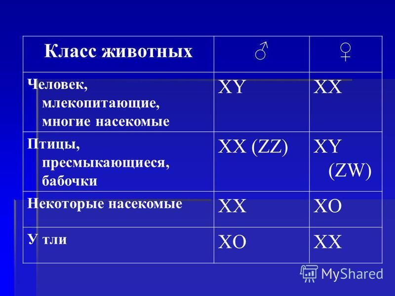 Класс животных Человек, млекопитающие, многие насекомые XYXX Птицы, пресмыкающиеся, бабочки XX (ZZ)XY (ZW) Некоторые насекомые XXXO У тли XOXX