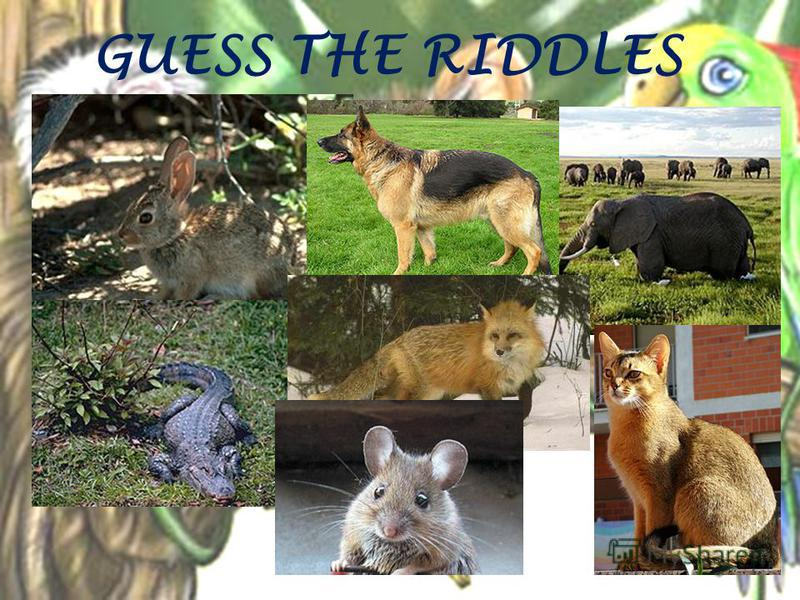 GUESS THE RIDDLES