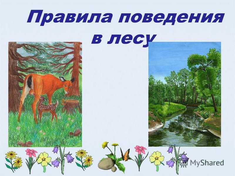 Правила поведения в лесу Правила поведения в лесу. Берюхова елена.